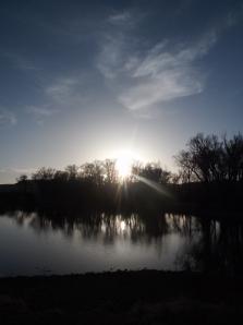 dog swim, sun, sunset 084