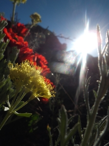 boldly forth into the sun