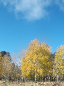 aspens are still clinging to fall as well